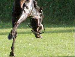 Bir at nasıl böyle takla atabilir?