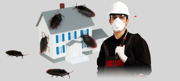 İstanbul Üsküdar Böcek İlaçlama