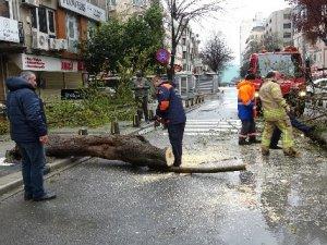 Mecidiyeköy'de fırtına ağacı devirdi