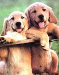 Esnemek köpeklerde de bulaşıcı