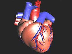 Yapay kalp 2011'de hazır