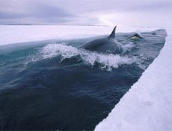 Antartika'dan özel görüntüler