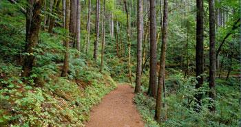 'Orman talanı' yürürlükte