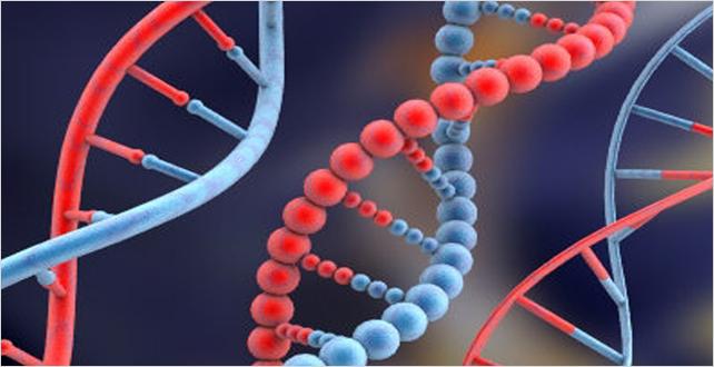 Uzun ömrün sırrı genlerde mi?