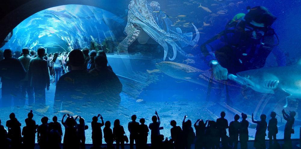 Dev akvaryumu Turkuazoo 25 Ekim'de açılıyor