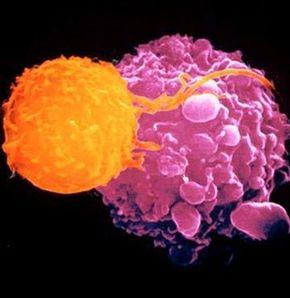 Türklerin de katkısıyla yeni kanser ilacı yolda!
