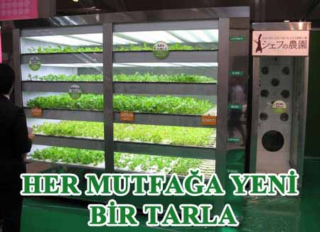 Taze sebze yetiştirebilen mini tarlalar icat edildi.
