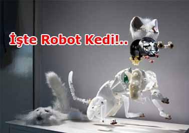 İnanması Zor Ama Bu Kedi Bir Robot