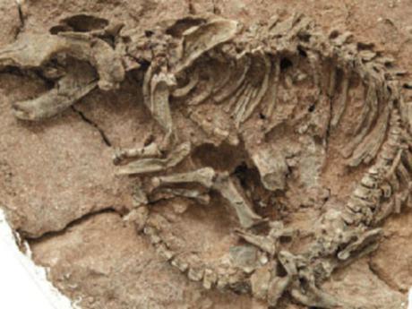Dünya'nın en büyük dinozor mezarlığı bulundu