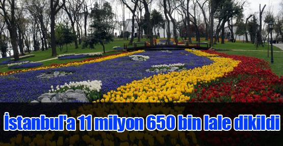 İstanbul'a 11 milyon 650 bin lale dikildi