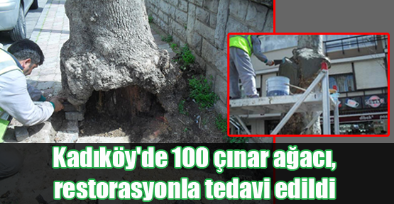 Kadıköy'de 100 Çınar Ağacı'na Restorasyon
