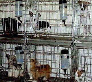 """""""Şişli'de Hayvan Satışı Yasaklanmalı"""""""