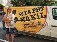 Pet Taksi İle Ulaşıma Çözüm