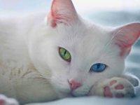Kediler İçin En İyi İsimleri Petsbook'ta