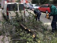 İstanbul'daki fırtına Şişli'de yine bir ağacı devirdi